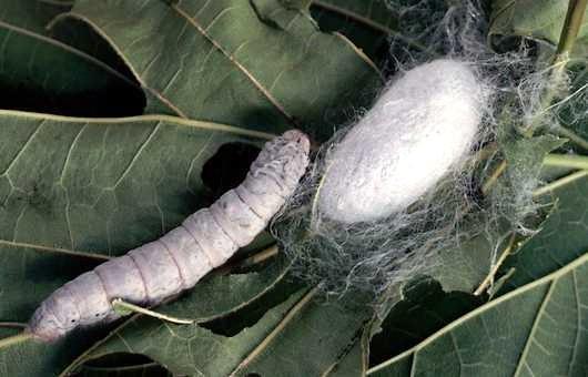 sensul paraziților în vise tratamentul și prevenirea viermilor la adulți