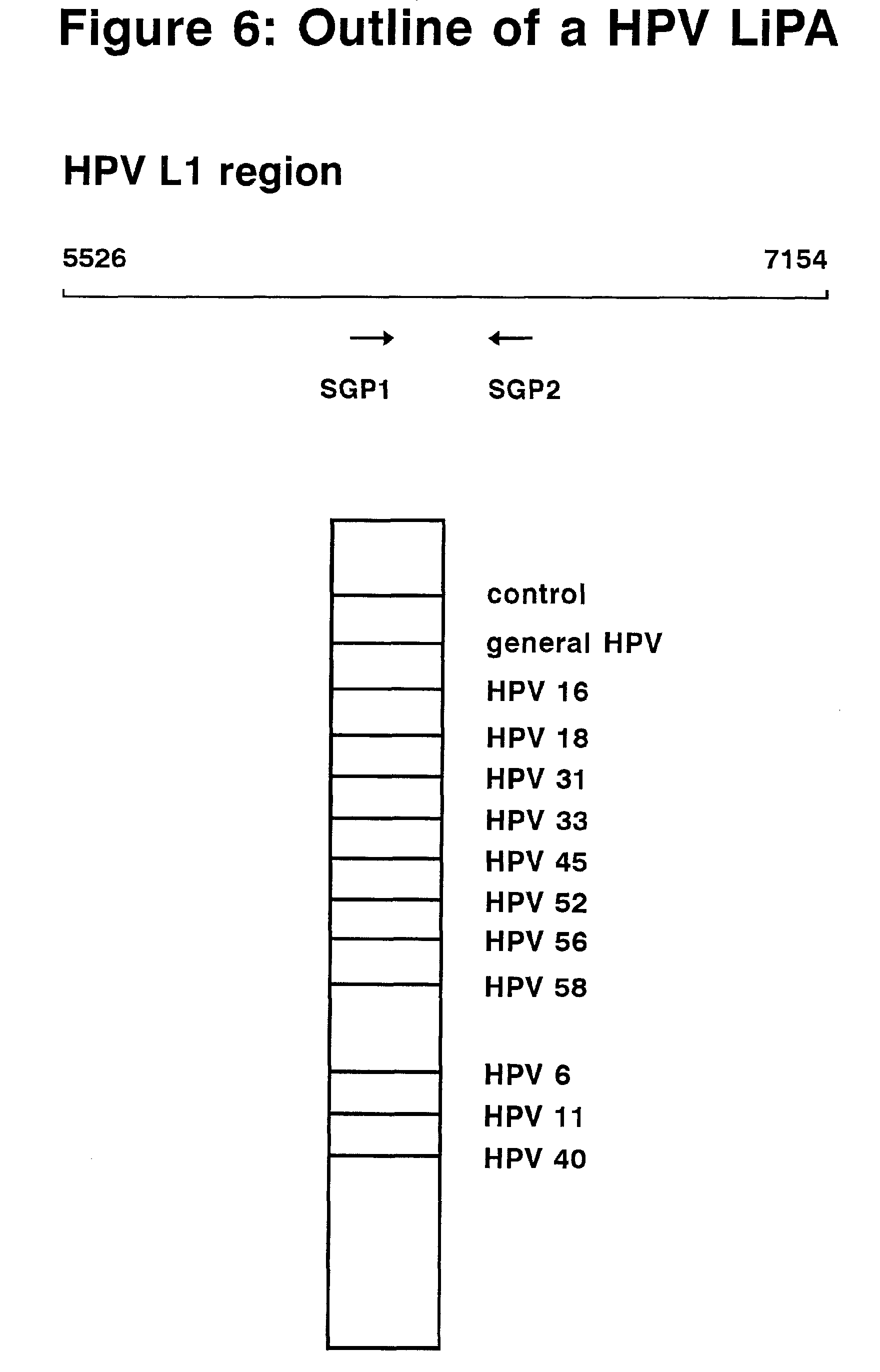 detection du papillomavirus