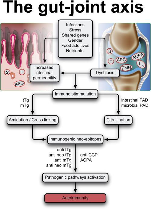 dysbiosis rheumatoid arthritis hpv vaccine green book