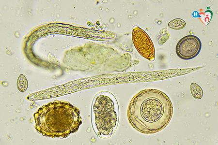 diferența dintre prădători și paraziți papilloma virus cure