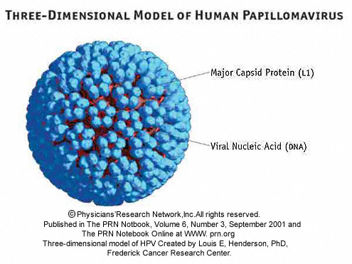 hpv viral or bacterial curățarea paraziților ziua 1