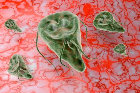 Diabetes infecciones parasitarias Ascaris y Giardia - Enterobius vermicularis en ninos
