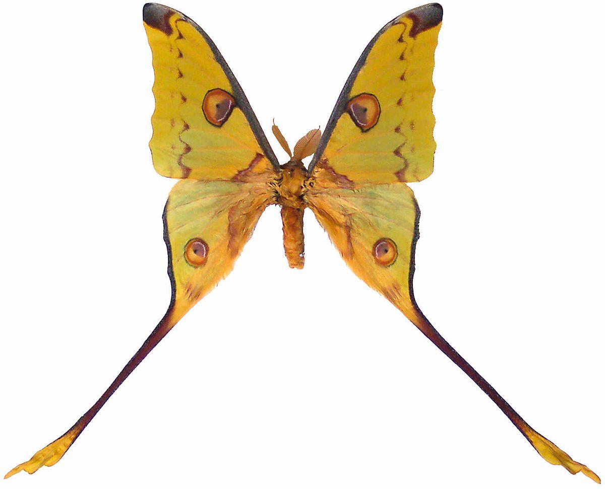 endemică de insecte preparate pentru viermi și curcani