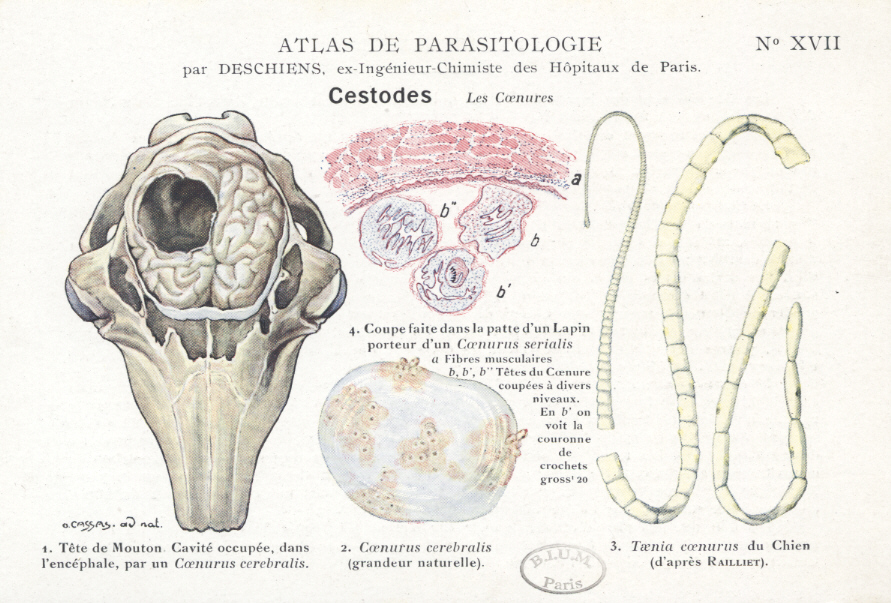 giardioza veziculara