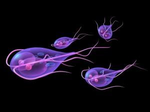 Parasitos oxiuros sintomas - Manejo de herramientas para el hongo de las uñas en casa