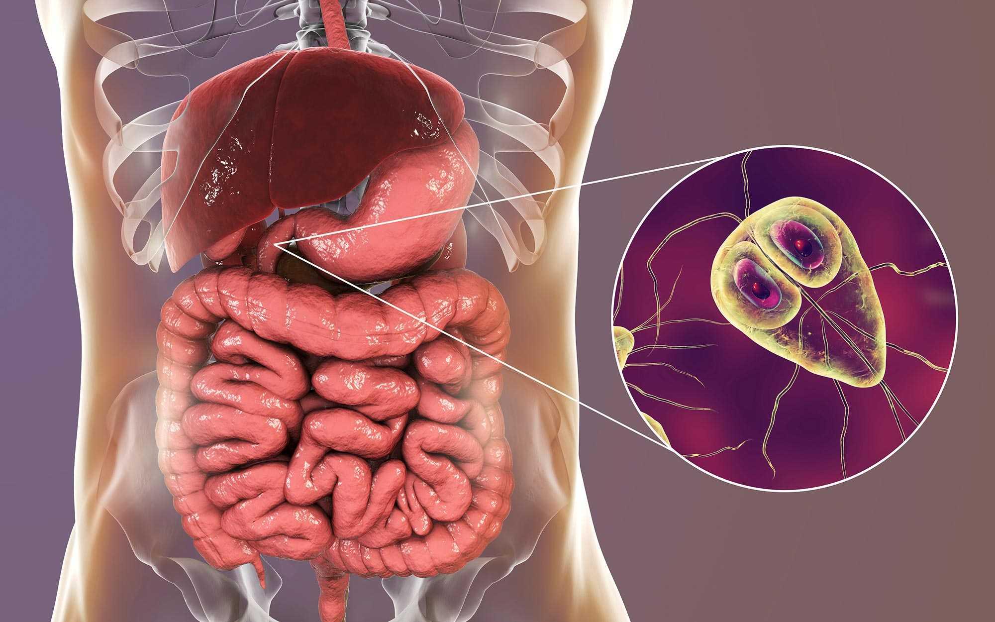 giardien simptom mensch behandlung curs antiparazitar