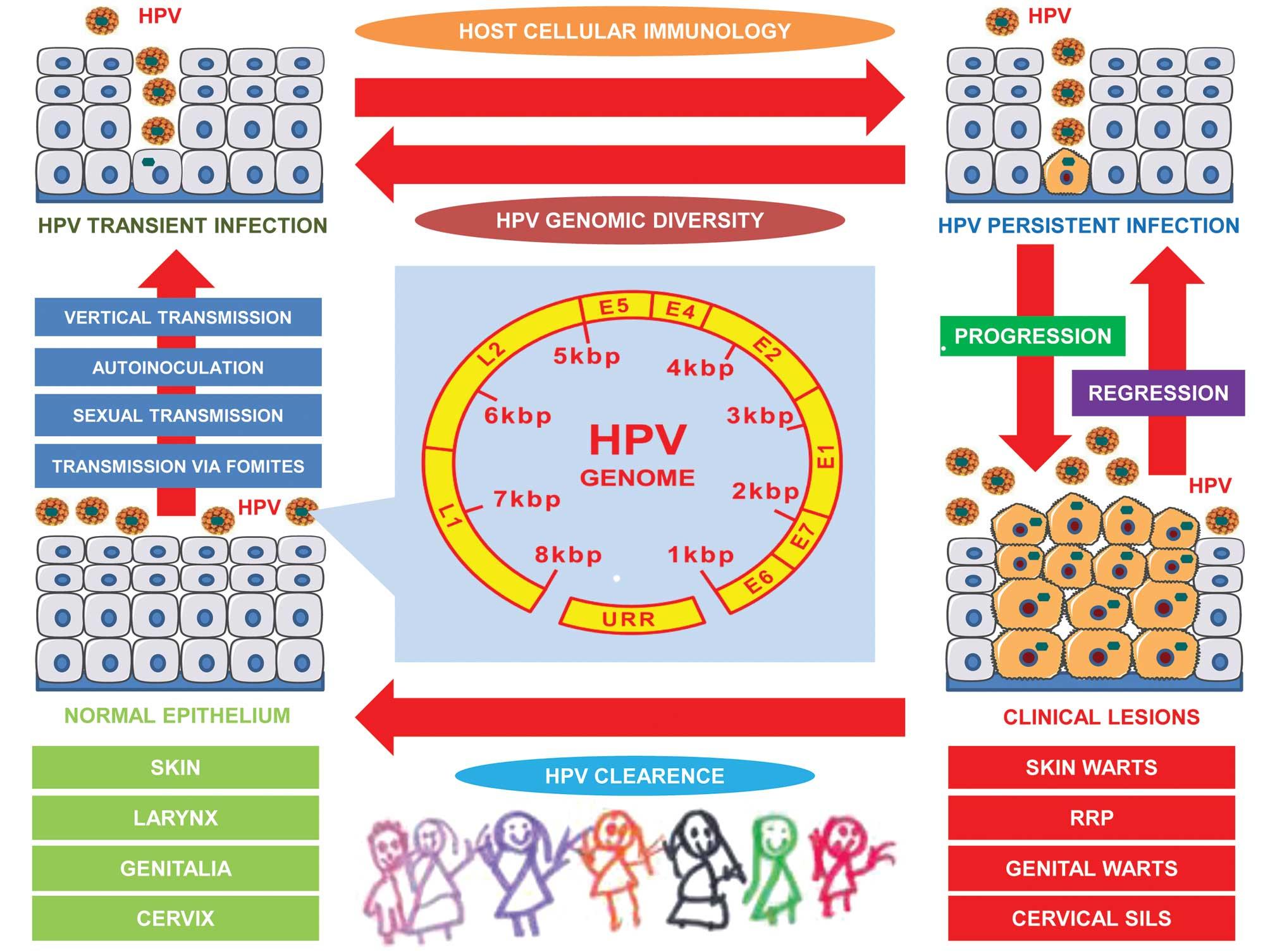 human papillomavirus vaccine mode tenă pitică la șoareci de laborator