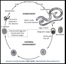 infecția cu nematode