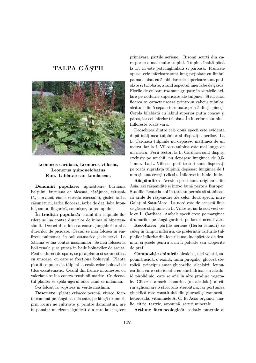 Propolisul, medicament natural: ce afecțiuni calmează - transroute.ro