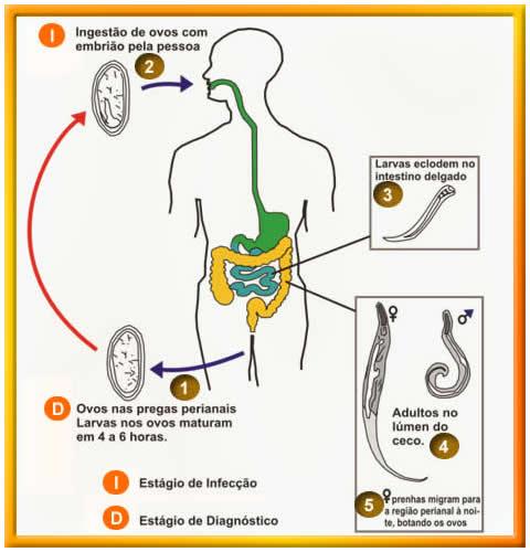 Nome cientifico oxiurus, Papilloma benigno o maligno