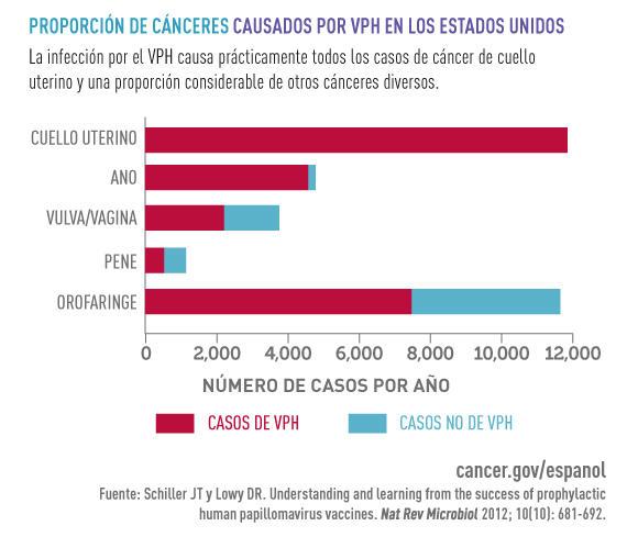 Que quiere decir hpv positivo, Virusul Papilloma Uman (HPV) - Revista Galenus