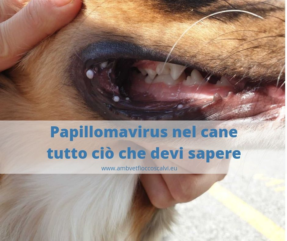 Cura papilloma virus cane - transroute.ro