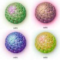 que significa hpv positivo duct papilloma medscape
