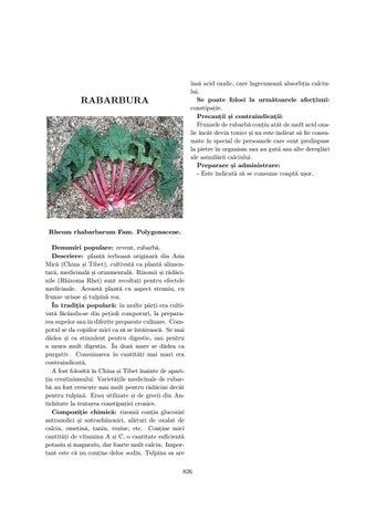 Radacini rubarba (revent , rebarbara , rabarbar) - producato, 5 lei - transroute.ro
