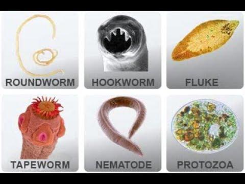 oxyuris vermicularis ciclo produse detoxifiere si slabire