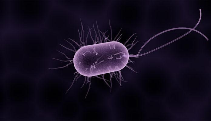 paraziti gastrici amoeba tratamentul crustaceelor parazite