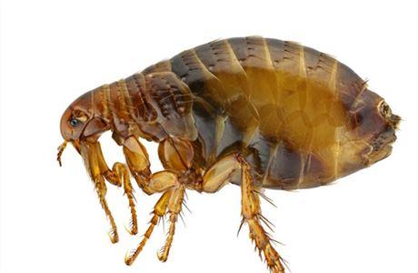 Paraziti v domacnosti