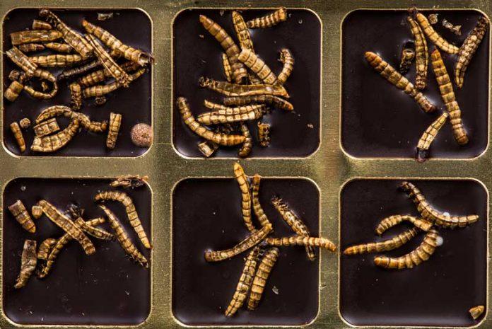 viermi găsiți în grădina copilului