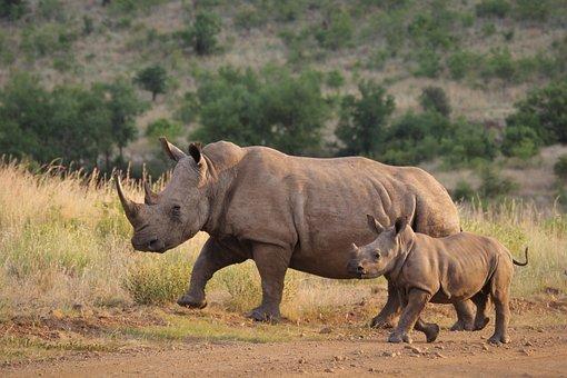 Ghiozdan mic patrat rinocer albastru Marius - filme-indiene.ro Rinocer copil mic