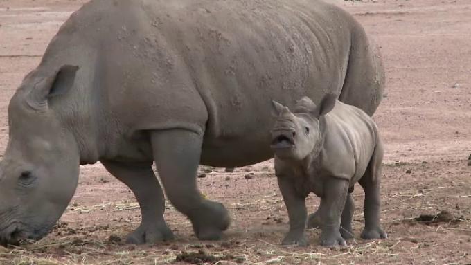 rinocer la copii