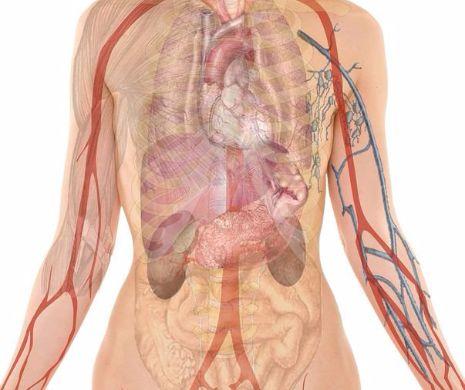Pancreatita - cauze, simptome si cum se poate trata | MedLife