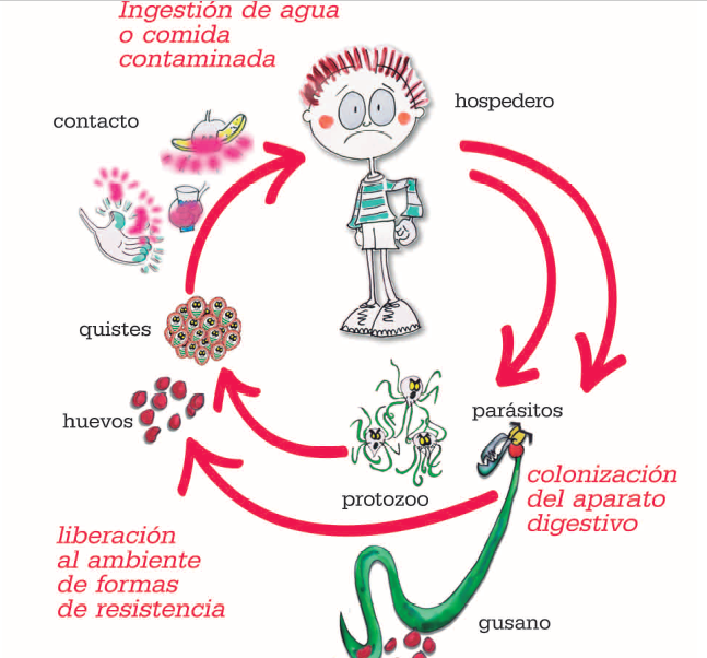 tratamientos para oxiuros parasitos