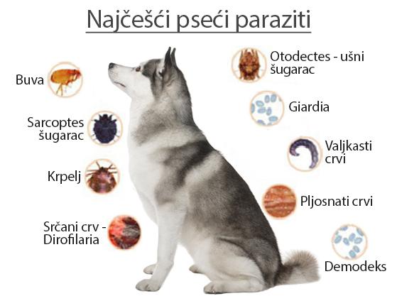 unutarnji paraziti kod macaka que alimentos producen oxiuros