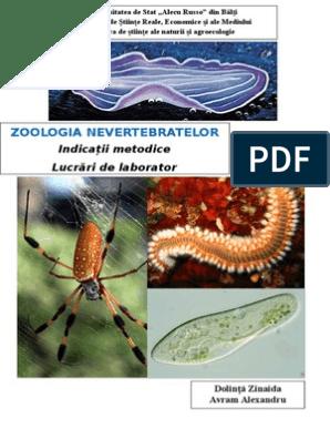 parazitii oficial hpv virus ansteckend fur manner