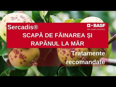 viermele gutuiului vierme de ureche