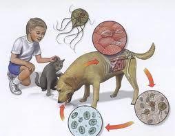 viermisorii la copii simptome