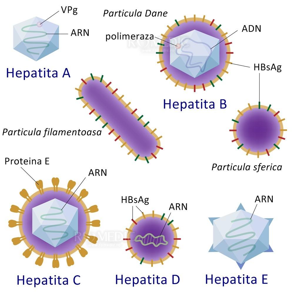 virusi hepatici b stadiile de tratament ale viermilor la copii