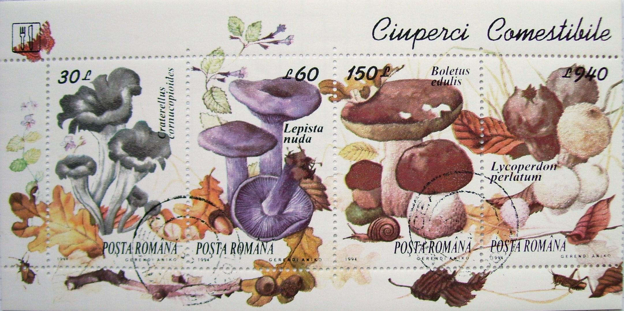 www ciuperci comestibile