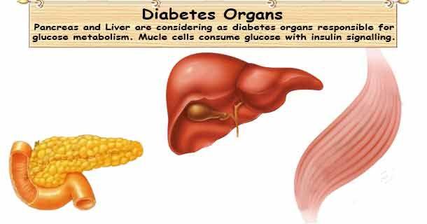 viermi în organele genitale