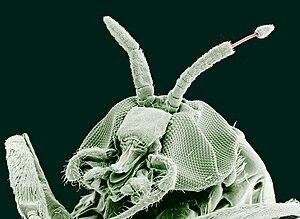 Rostliny paraziti - dieta-daneza.ro - Rostliny paraziti