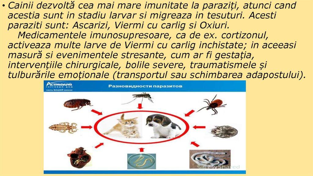 vierme parazitar