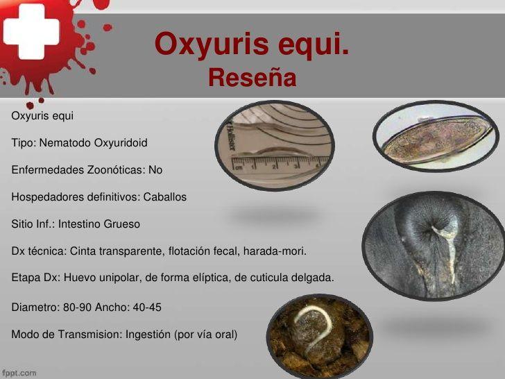 oxyuris equi nematoda ac și medicina viermilor