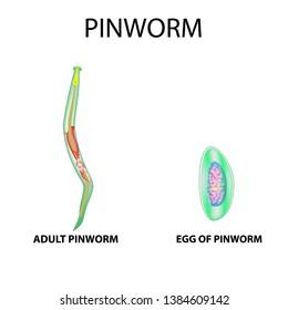 hpv virus pregnancy