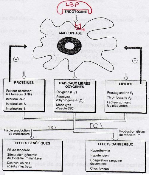hpv 16 and ovarian cancer cancer tratament turcia