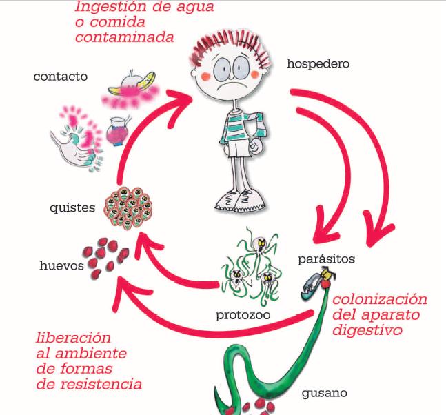 viermi în tratamentul corpului uman