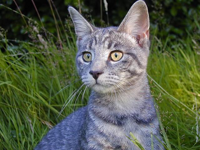 terapia giardia nel gatto hpv warts symptoms