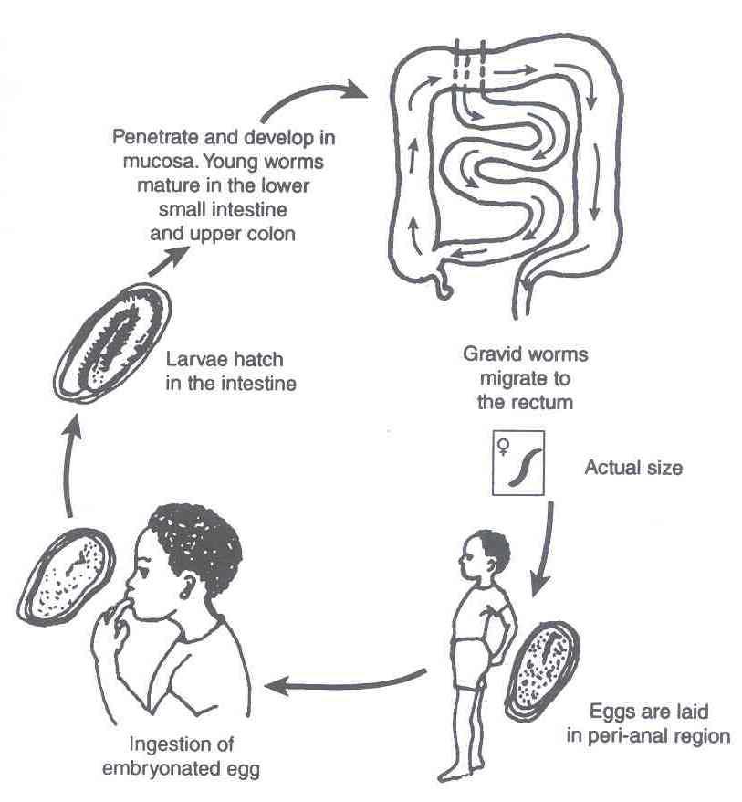 cancer de prostata unicamp papillomavirus quoi faire