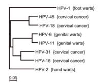 papillomavirus en arabe vaccino papilloma virus brescia