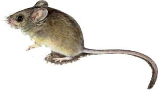 paraziti rozatoare simptome de viermi la adulți ca tratament
