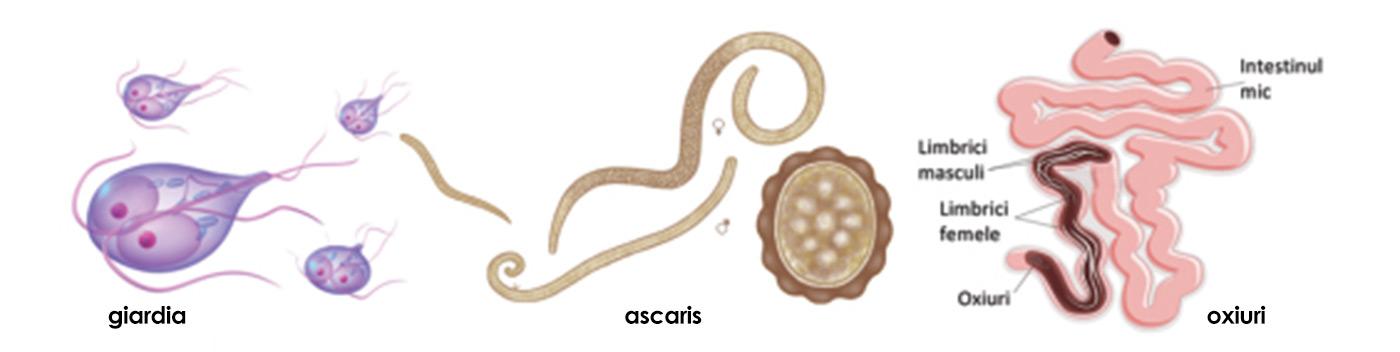 preparate de paraziți interni pentru oameni cancerul organelor genitale feminine