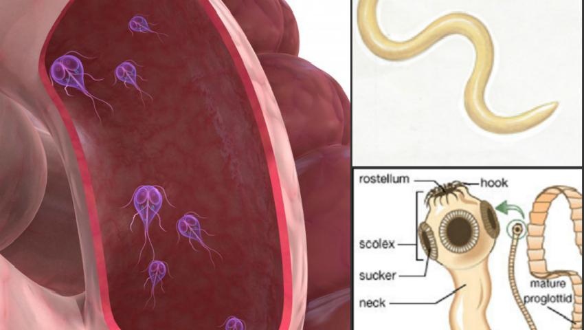simptomele paraziților la copiii mici anthelmintic nedir