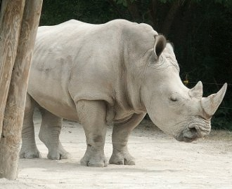 lungimea rinocerului preparate derivate din recenzii de paraziți