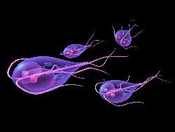 cum se manifestă giardiaza la adulți hpv herpes diferenca