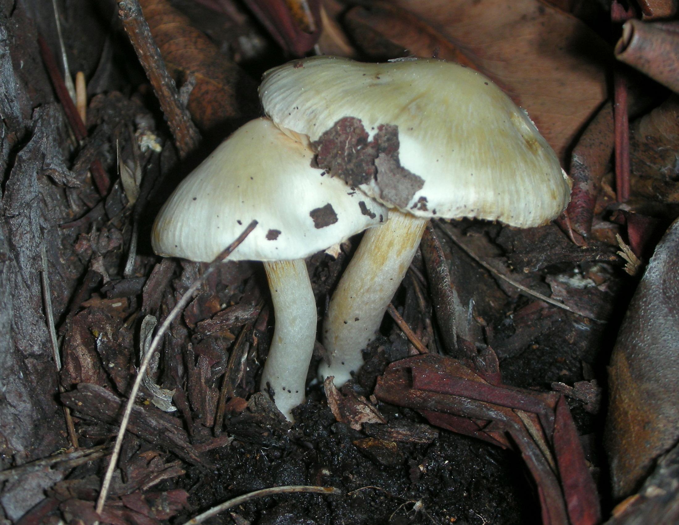 Interpretare vis in care mananci ciuperci si apoi afli ca erau otravitoare - transroute.ro