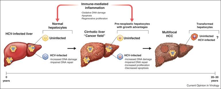 Hepatic cancer and hepatitis,