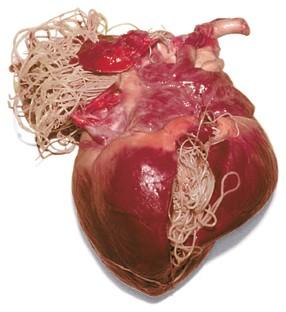 medicamente pentru viermi de inimă gastric cancer overview